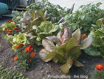 Veg-garden-3-350